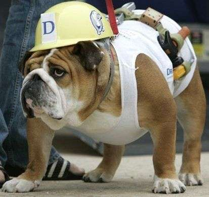 Diy dog costumes maskerix diy construction worker halloween dog costume idea solutioingenieria Image collections