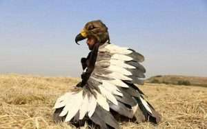 Etsy - DIY Eagle Halloween Costume Idea